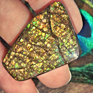 Vibrant Moving Sparkling  Flash Alberta Ammolite Cabochon Ideal for Crafting - Earth Family Crystals