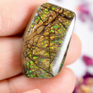 Orange & Green Alberta Ammolite Free Form Cabochon~Perfect for Crafting!