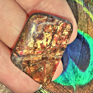 Golden & Red Flashes Alberta Ammolite Cabochon Ideal for Crafting - Earth Family Crystals