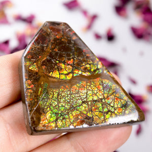 Intense Rainbow Flash Chunky Alberta Ammolite Free Form~Perfect for Crafting!