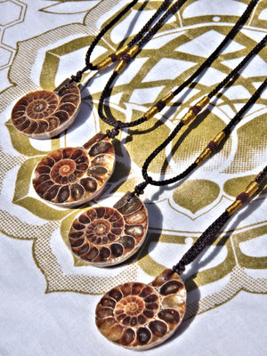 Fantastic Ammonite Fossil Floating Necklace on Adjustable Cord