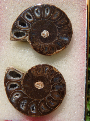 Fabulous Deep Druzy Cave Complete Ammonite Set in Collectors Box From Madagascar - Earth Family Crystals