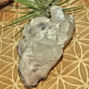 Angelic Clear Apophyllite Points Nestled on Matrix From India - Earth Family Crystals