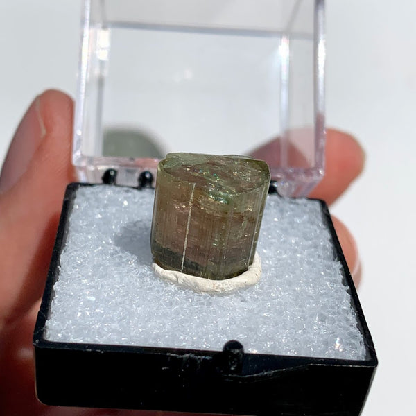Rare Gemmy Watermelon Tourmaline Point From Brazil in Collectors Box #3 - Earth Family Crystals