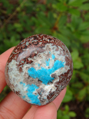 Electric Blue Cavansite in Partially Polished Matrix Palm Stone From India 2