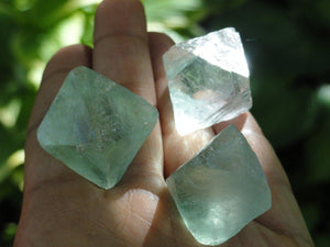 3  GREEN OCTAHEDRON FLUORITE Sacred Geometry Shapes - Earth Family Crystals