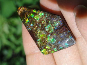 AMMOLITE CABOCHON From Alberta - Earth Family Crystals