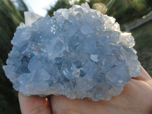 BLUE CELESTITE CLUSTER - Earth Family Crystals