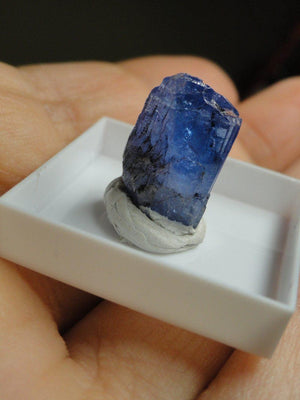 Rare Gemmy TANZANITE SPECIMEN In Collectors Box - Earth Family Crystals
