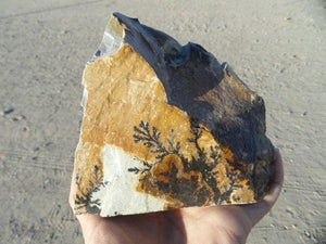 Large Picturesque Dendrite Display Specimen - Earth Family Crystals