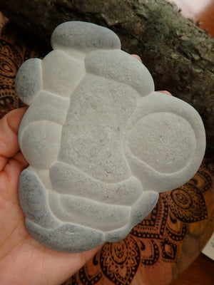 Jumbo Quebec Fairy Stone Concretion From Canada - Earth Family Crystals