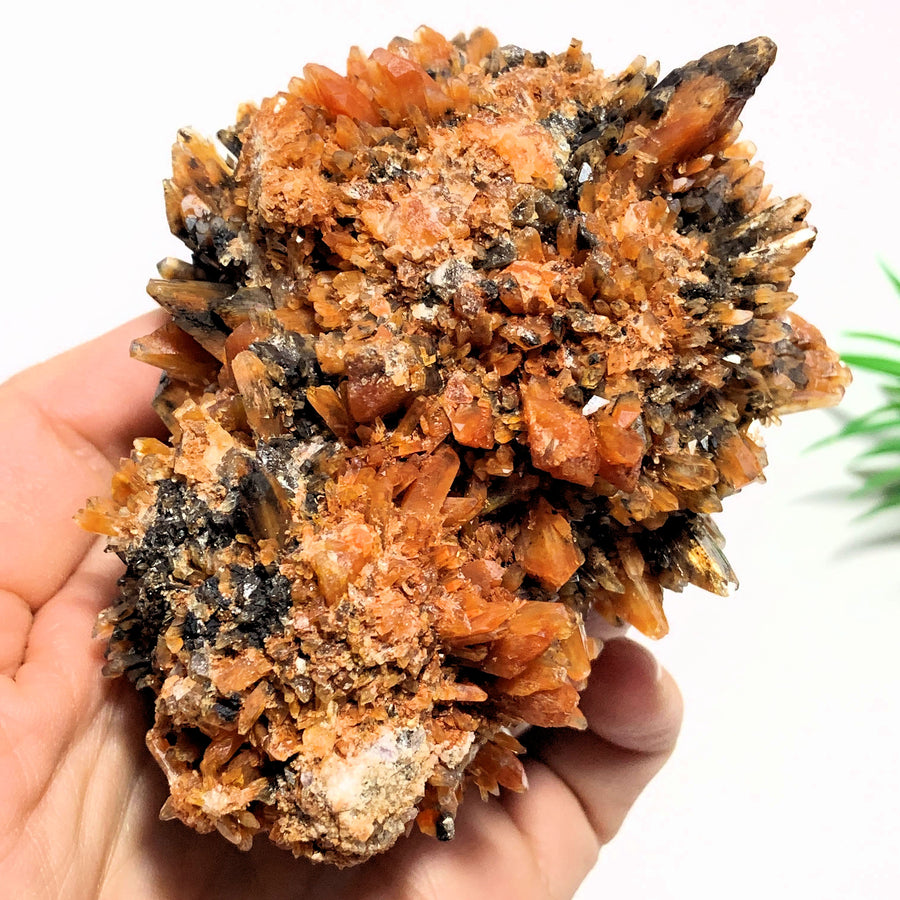 Beautiful Color Contrast Large & Rare Creedite Specimen~Locality Mexico