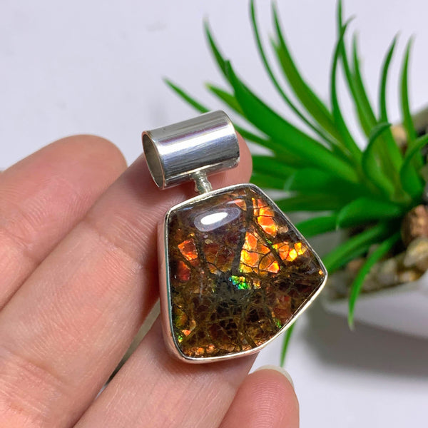 Canadian Ammolite Pendant in Sterling Silver (Includes Silver Chain)