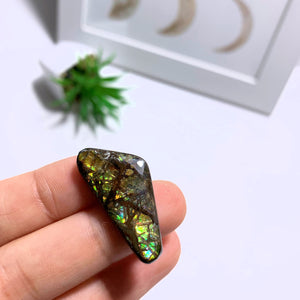Ammolite Cabochon From Alberta ~Ideal for Crafting #3