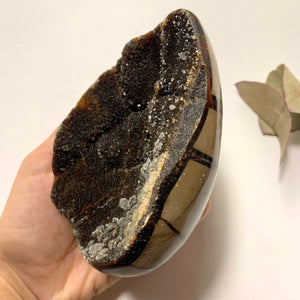 Fascinating Chocolate Brown Druzy Septarian Dragon Egg Display Geode With Calcite Inclusions - Earth Family Crystals