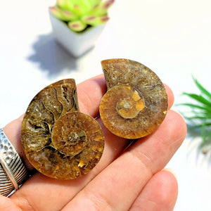 Druzy Caves~ Complete Ammonite Small Set Partially Polished From Madagascar