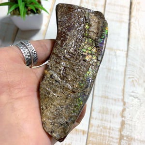 Chunky Alberta Ammolite Fossil Free Form Hand Held Specimen (Partially Glazed)