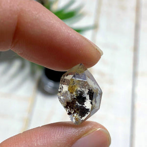 New York Herkimer Diamond with black Anthraxolite inclusions in Collectors Box #2