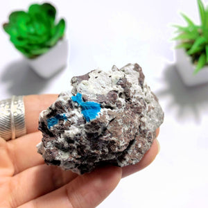Natural Blue Cavansite Nestled In Druzy Matrix ~Locality India - Earth Family Crystals