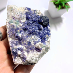Rare & Unusual Deep Blue Fluorite Crystals on Matrix - Earth Family Crystals