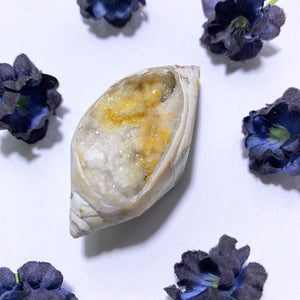 Shimmering Rare Spiralite Gemshell With Citrine Inclusions~Locality India
