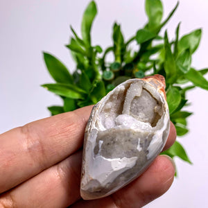 Spiralite Gemshell Specimen From India