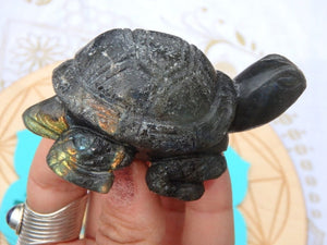 Adorable Labradorite Turtle Carving - Earth Family Crystals