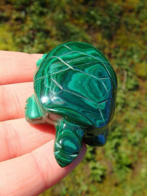 Adorable Green Malachite Turtle Carving - Earth Family Crystals