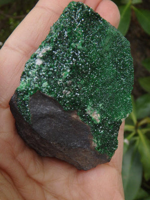 RARE! Gorgeous Sparkling Green UVAROVITE GARNET Specimen From Russia - Earth Family Crystals