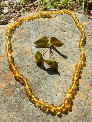 Vibrant Lemon Lithuanian Baltic Amber Adult Necklace