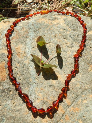 Vibrant Cognac Lithuanian Baltic Amber Adult Necklace