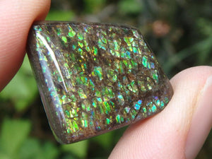 Green & Purple Flash Alberta AMMOLITE CABOCHON Perfect For Wire Wrapping - Earth Family Crystals