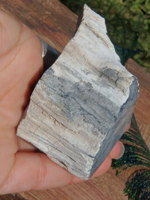Unique Petrified Wood Partially Polished Specimen From Princeton, BC, Canada - Earth Family Crystals
