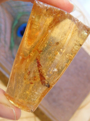 Bug Inclusions! Golden Colombian Amber Specimen 1 - Earth Family Crystals