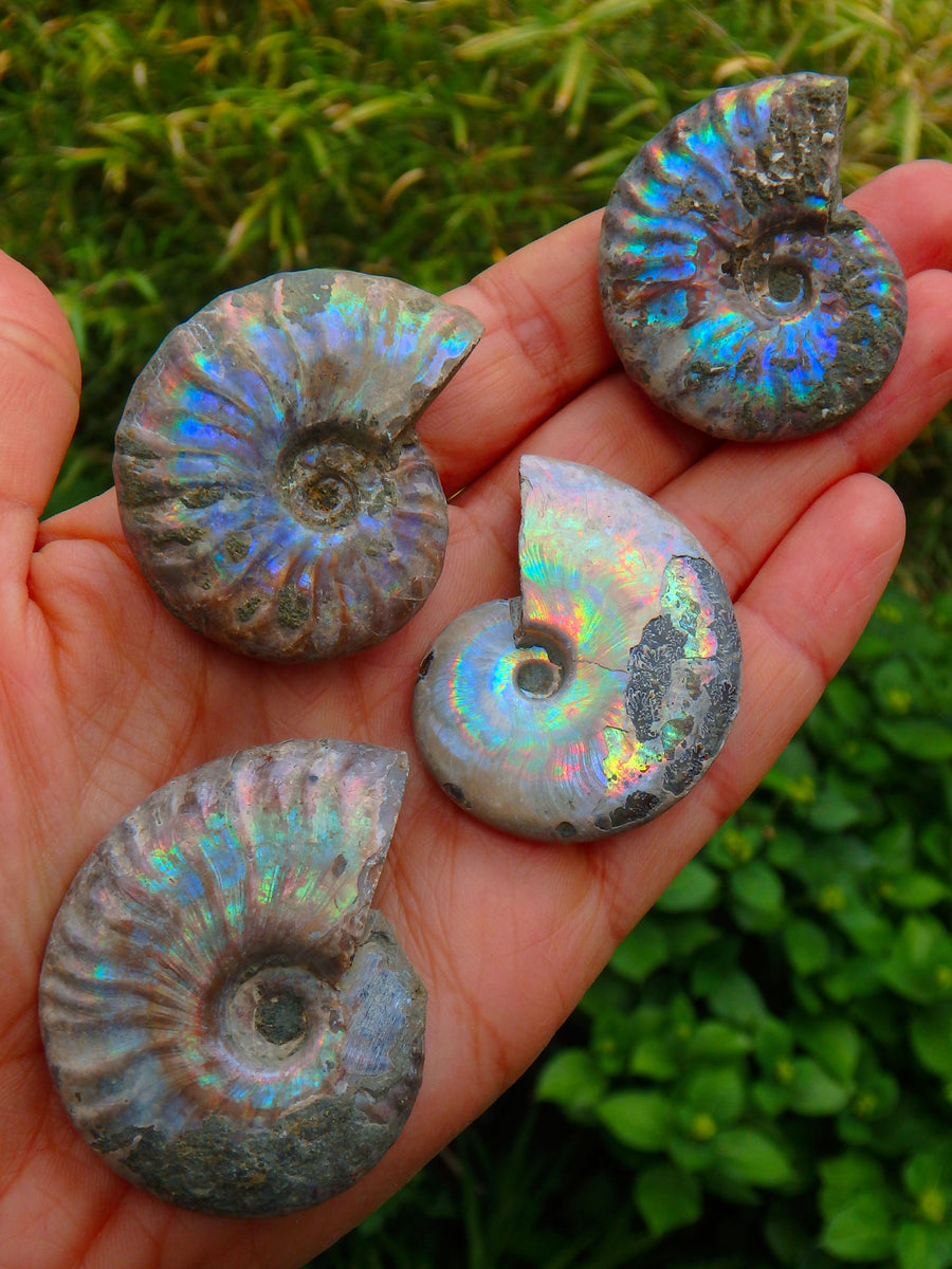 Incredible Natural Rainbows Ammonite Specimen From Madagascar (1)