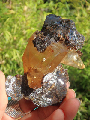 Absolutely Amazing Large Collectors Elmwood Mine Golden Calcite & Sphalerite Display Specimen - Earth Family Crystals