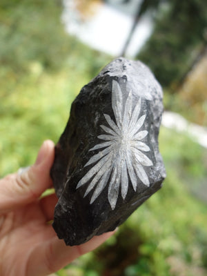 Super Cool Flower Pattern Chrysanthemum Stone Specimen - Earth Family Crystals