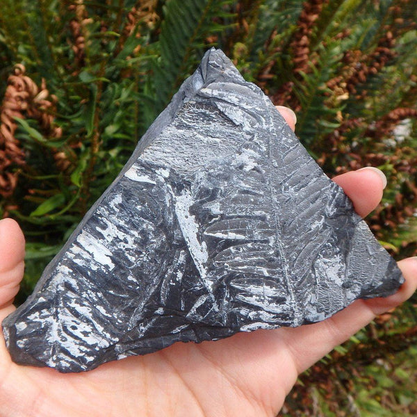300 Million Year Old Fern Fossil Specimen - Earth Family Crystals