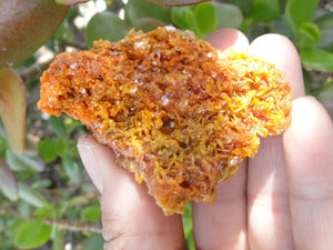 Bright Orange Wulfenite CLUSTER From Sonora. Mexico* - Earth Family Crystals