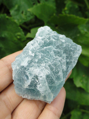 Hand Harvested Green FLUORITE SPECIMEN From BC, Canada* - Earth Family Crystals