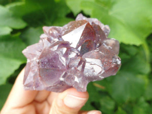 Hand Harvested Canadian AMETHYST CLUSTER With Red Hematite Inclusions* - Earth Family Crystals