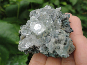 Sparkling CLEAR APOPHYLLITE On Black Chalcedony Matrix - Earth Family Crystals