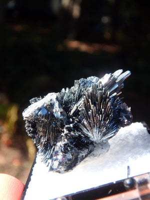 Intricate & Stunning Stibnite Specimen From Herja Mine, Romania In Collectors Box - Earth Family Crystals