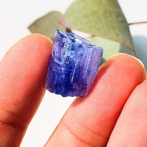 19CT High Grade Gemmy Tanzanite Specimen in Collectors Box #2 - Earth Family Crystals