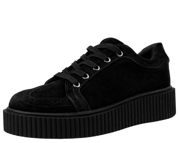 Black Wingtip Casbah Creeper