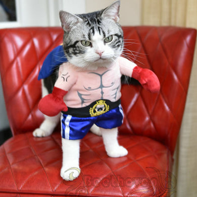 Halloween cat boxer standing costume Cat-clothe