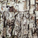 FOREST GHOST TREE BARK