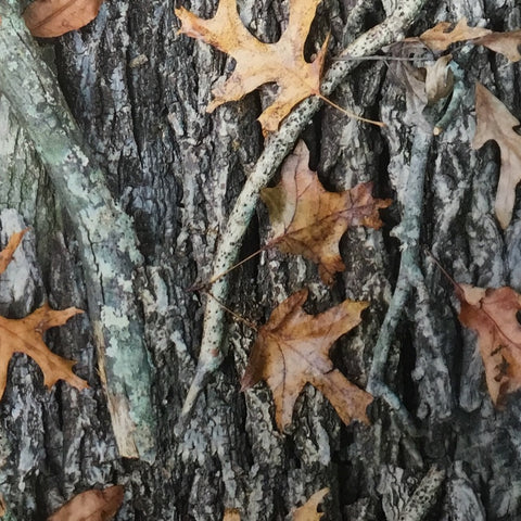 OAK LEAVES CAMO