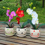 Bonsai Pot Flowers Seeds Ornamental Orchid - Shotisfy