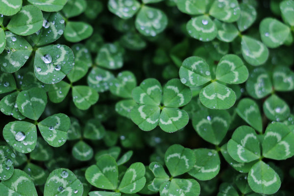 7 Tips To Surviving Your St. Patrick's Day Bender